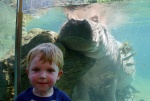 Will & the hungry hippo